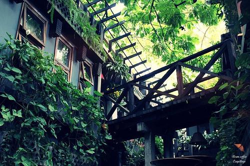 10 quán cafe sân vườn đẹp ở Sài Gòn. Ảnh 24