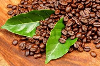 Hạt cà phê rang mộc Buôn Mê, có gì đặc biệt?