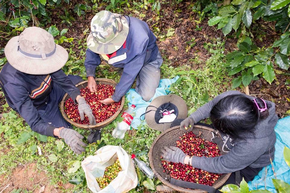 12 trải nghiệm thưởng thức cafe đáng thử ở Sài Gòn. Ảnh 5